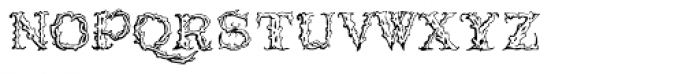 1565 Venetian Normal Font LOWERCASE