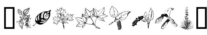 ArborisFolium Font OTHER CHARS