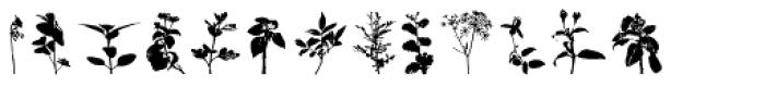 Arbusto Font UPPERCASE