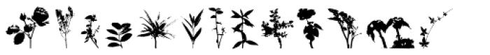 Arbusto Font LOWERCASE
