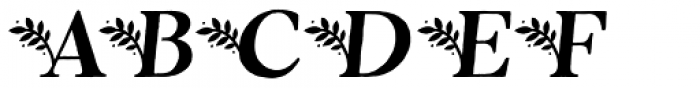 Botany Italic Font UPPERCASE