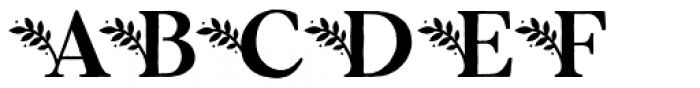 Botany Regular Font UPPERCASE