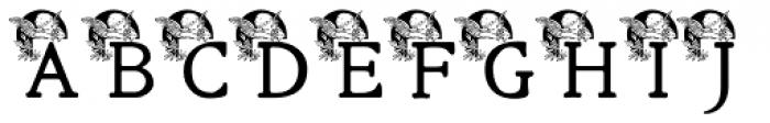 Cherub Regular Font UPPERCASE