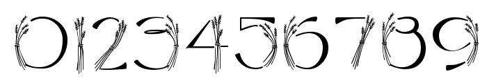 CK Harvest Font OTHER CHARS