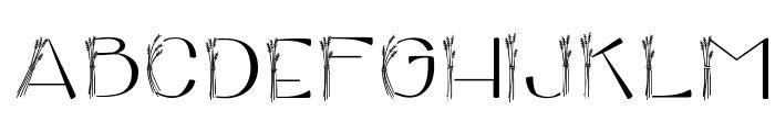 CK Harvest Font LOWERCASE