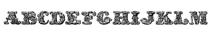 exotica Medium Font LOWERCASE