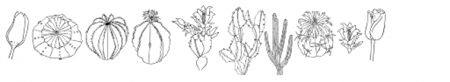 Flower Sketch Neue Font OTHER CHARS
