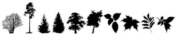 FT Forest Font UPPERCASE