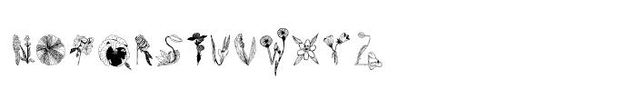Herbarium Font LOWERCASE