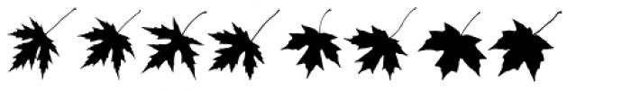 MapleOaks DL Font LOWERCASE