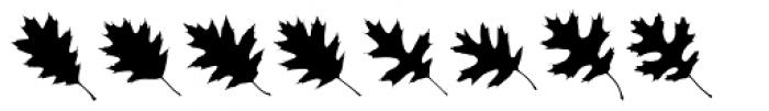 MapleOaks UL Font UPPERCASE