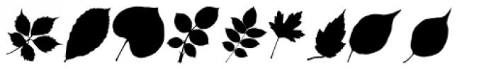 MoreLeaves UR Font OTHER CHARS