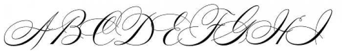 Splendid Script Font UPPERCASE