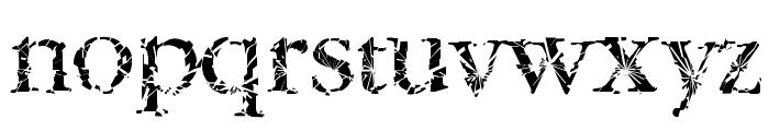 TwyliteZone-Book Font LOWERCASE