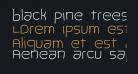 black pine trees