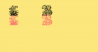 Lime Blossom Caps