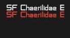 SF Chaerilidae Bold