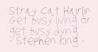 Stray Cat Hairline