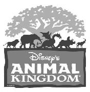 what font is ANIMAL and KINGDOM